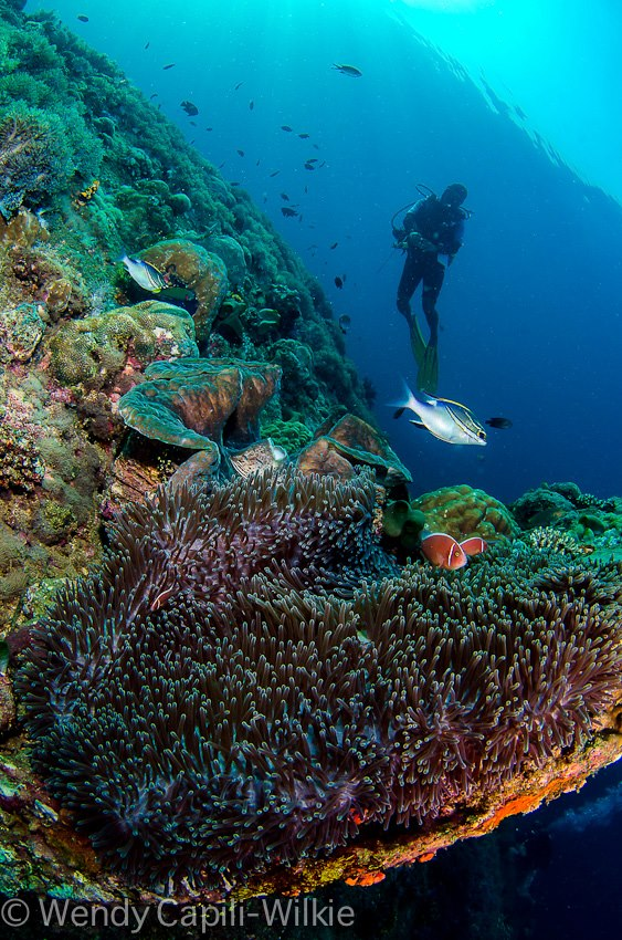 Enjoy the thrill of underwater in Anilao Batangas
